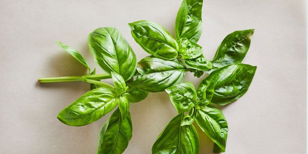 CD 26900 PREVIEW HOW TO STORE AND PRESERVE FRESH BASIL