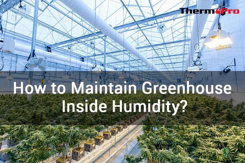 HOW TO MAINTAIN GREENHOUSE HUMIDITY ¿CÓMO MANTENER LA HUMEDAD INTERIOR DEL INVERNADERO?